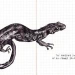 all female salamanders