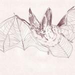 bat sm