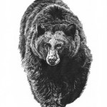 bear sm