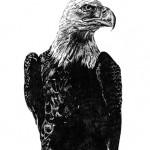 eagle sm