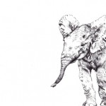 elephant sm