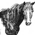 horse sm
