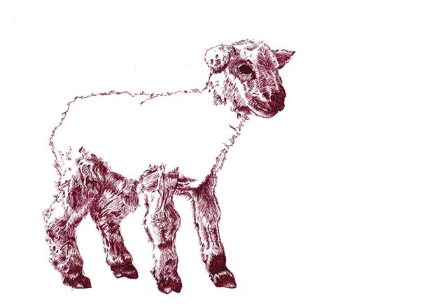 lamb sm