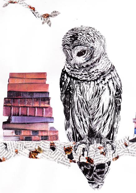 nicola's owl sm