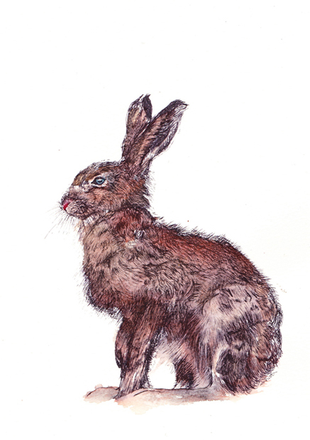 painted hare sm