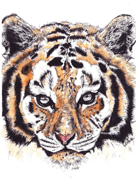 painted tiger sm