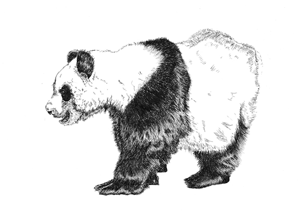 panda sm