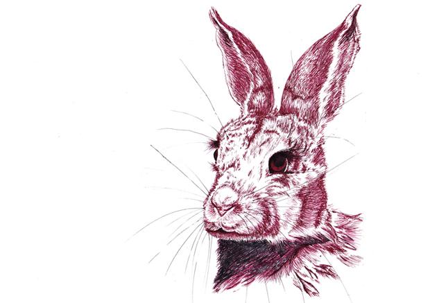 rabbit sm