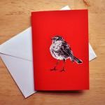 robin card s,