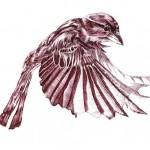 sparrow sm