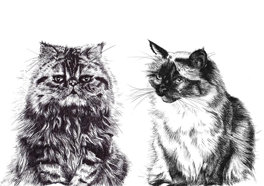 Pam's cats landscape