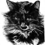 laura's cat