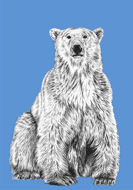 polar sm