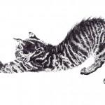 tabby manx cat landcape